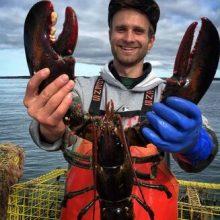 cooper-lobster